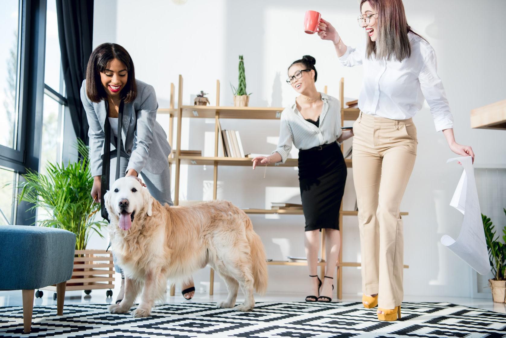 Van kroket naar kantoorhond: 5 tips om stress op het werk te vermijden